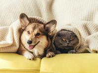 Жителям Кирова запретили держать собак и кошек в коммуналках без согласия соседей