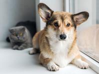 В Госдуму внесен законопроект об обязательной регистрации собак и кошек