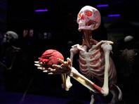 В Москве потребовали закрыть просветительскую выставку на ВДНХ с реальными человеческими телами (ФОТО)