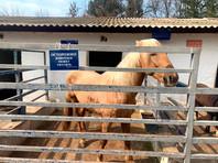 В детском зооуголке Симферополя лошадь откусила палец пятилетней девочке