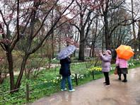 После майских праздников в Москву вернется солнечная погода