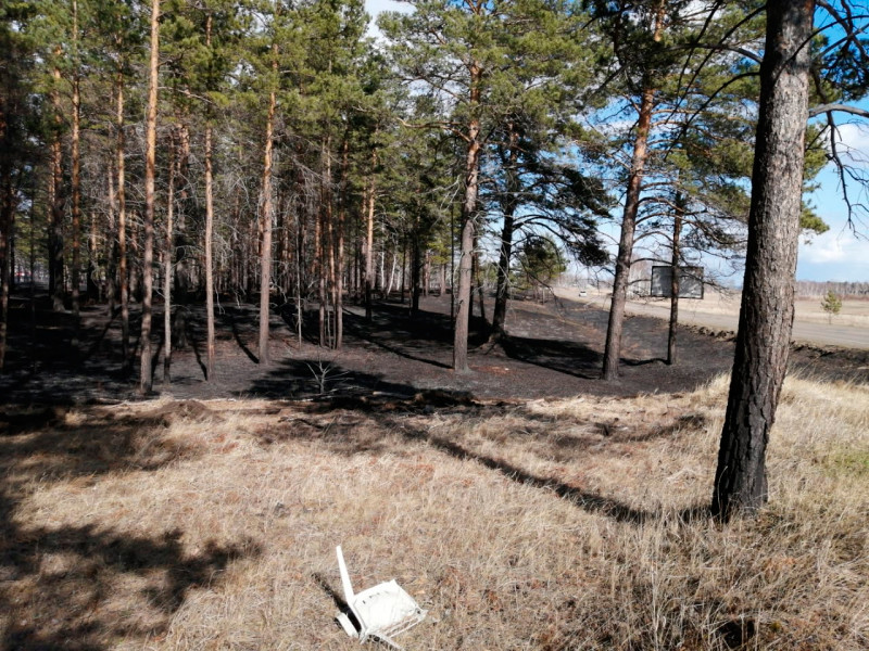 """A resident of the Irkutsk region set fire to the forest, """"freaked out"""" because no one wanted to give him a lift"""