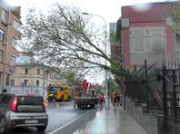 В Москве  ураган повалил 56 деревьев, повреждены 44 автомобиля