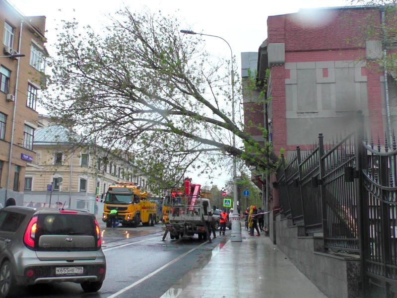 Упавшее дерево на Яузском бульваре, 6 мая 2021 года