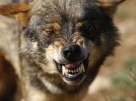 Фермеры в Испании сделали отрубленные головы иберийских волков символом протеста