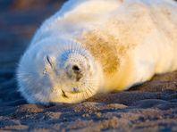 В США на атлантическом побережье запретили селфи с морскими львами