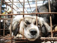 Торговцы собачьим мясом со скандального фестиваля в Китае нашли лазейку для избавления от конфликтов с властями