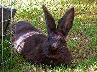 В Италии уволили учителя за убийство молотком двух кроликов на уроке биологии