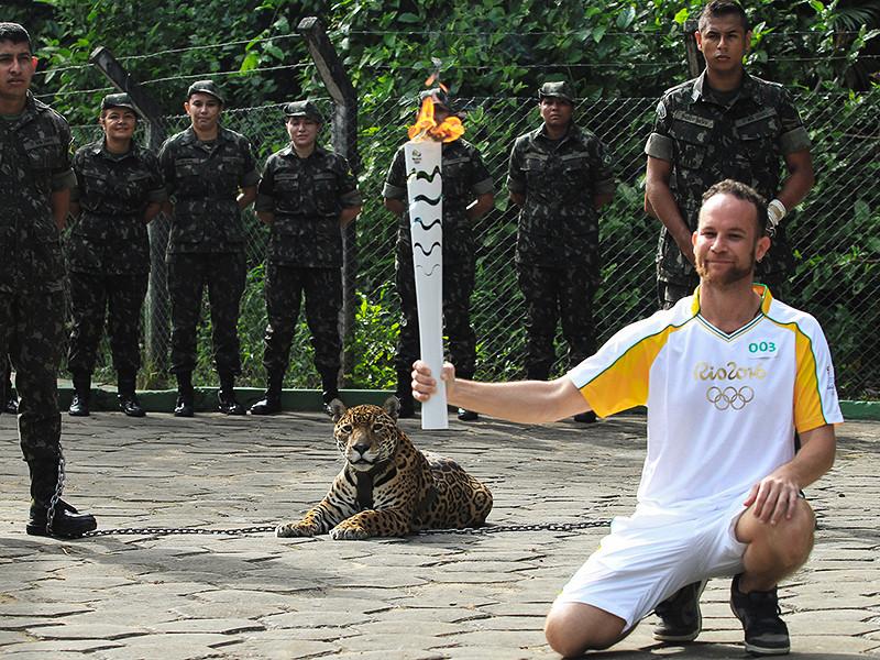 В Бразилии пристрелили ягуара, участвовавшего в эстафете олимпийского огня