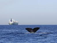 В Средиземном море начались поиски кораблей с грузом оружия для ИГ