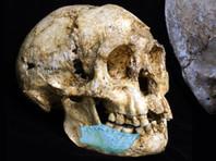 """Теперь австралийские палеонтологи раскопали фрагмент челюсти и несколько зубов, по всей видимости, принадлежавших одному взрослому и двоим детям - предположительно, предкам """"хоббитов"""""""