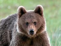 В Финляндии медведь сорвал военные учения с участием трех тысяч солдат