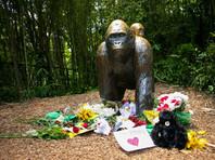 Мать ребенка, из-за которого в зоопарке Цинциннати застрелили гориллу, избежит наказания