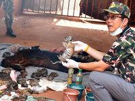 В Таиланде при вывозе зверей из буддийского монастыря нашли 40 мертвых тигрят