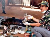 """В скандальном """"тигрином монастыре"""", где нашли десятки трупов тигрят, задержали трех буддийских монахов"""