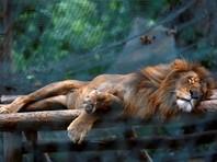 В венесуэльском зоопарке животные гибнут от голода