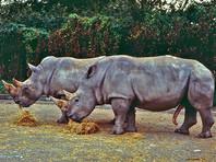В зоопарке Дублина выясняют, как ребенок оказался в загоне для носорогов (ФОТО)