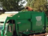 В США медведь проехал 8 километров на крыше мусоровоза (ВИДЕО)