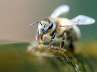 Троих человек госпитализировали после атаки десятков тысяч пчел в США