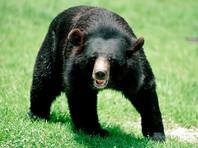 В японском сафари-парке медведь загрыз сотрудницу