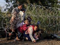 Венгерский политик предложил развешивать на границах свиные головы, чтобы ограничить поток мигрантов
