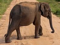 В Индии слон сбежал из цирка и устроил переполох в городе