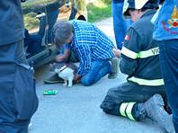 В Италии кот выжил, проведя 32 дня под завалами после землетрясения