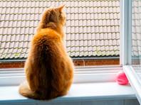 Потерявшаяся в Швейцарии кошка спустя год нашлась в Германии за 600 километров от дома