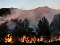 Лесной пожар уничтожил десятки жилых домов на севере Калифорнии