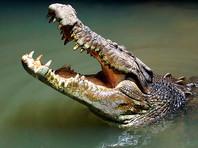 В Австралии подросток сам не заметил, как снял на ВИДЕО момент нападения на него крокодила