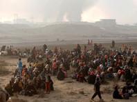 В ООН рассказали о тысячах похищенных жителей окрестностей Мосула, применяемых ИГ в качестве живого щита