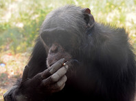 Посетителей зоопарка столицы Северной Кореи развлекает шимпанзе-курильщица (ФОТО)