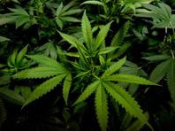 Кандидат на пост губернатора Юты призвал легализовать марихуану после того, как его жену признали виновной в хранении наркотика