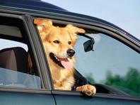 Австралийский министр повинился за перевозку своих собак на служебном авто