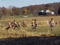 В США олени выбежали наперерез марафонцам - один бегун не успел увернуться (ВИДЕО)