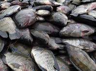 В Японии со скандалом закрыли каток, во льду которого заморозили 5000 рыб