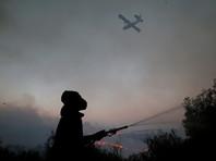 В Израиле задержали около 40 поджигателей, их могут приравнять к террористам