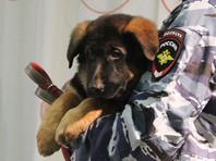 Российский пес Добрыня оказался непригодным к службе во французском спецназе
