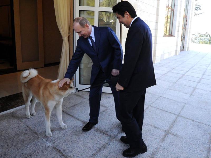 Москва отклонила предложение Токио подарить российскому лидеру самца породы акита-ину в дополнение к самке Юмэ, которую глава РФ получил в подарок в июле 2012 года