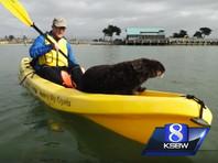 В Калифорнии дружелюбная выдра приняла участие в праздничном заплыве на каяках
