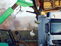 В Южной Корее в рамках  борьбы с птичьим гриппом уничтожено 26 миллионов кур и уток