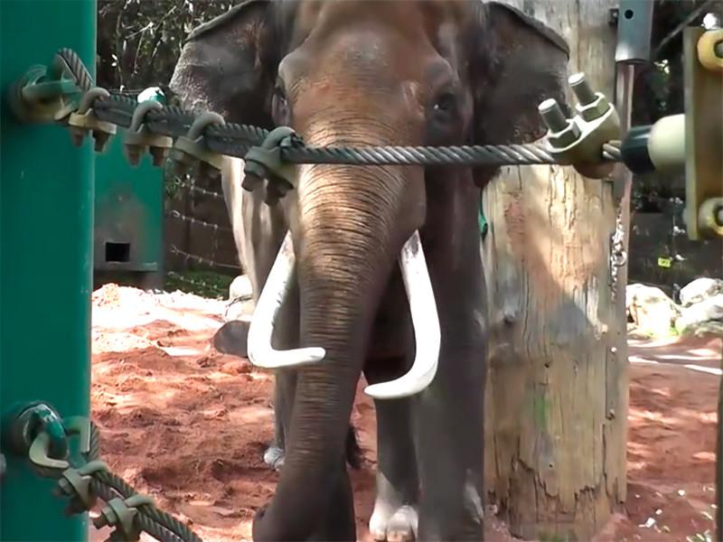 В австралийском зоопарке развлекают скучающего слона с помощью запахов