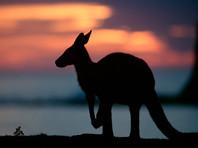 Австралийке пришлось притвориться мертвой, чтобы спастись от разъяренного кенгуру