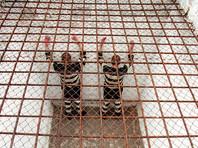 ЕСПЧ не нашел дискриминации при назначении пожизненных сроков в России