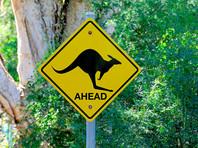 В Австралии кенгуру удалось молниеносно перепрыгнуть через велосипедиста в движении (ВИДЕО)