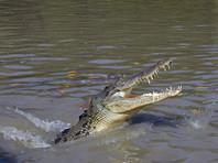 Австралиец решил перейти реку в запрещенном месте и стал жертвой крокодила