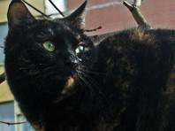 Голландская кошка сбежала из дома и за полгода нагуляла 950 километров по Европе
