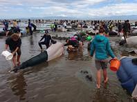 Волонтеры отмечают, что вернувшиеся в море дельфины выглядели не лучшим образом. Некоторые из них пытались повторно выброситься на берег