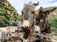 Китайская народная медицина спровоцировала массовое убийство африканских ослов