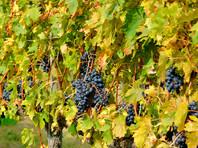 """Производитель вина в Тоскане о связях с Медведевым: """"Насколько я знаю, никаких связей нет"""""""